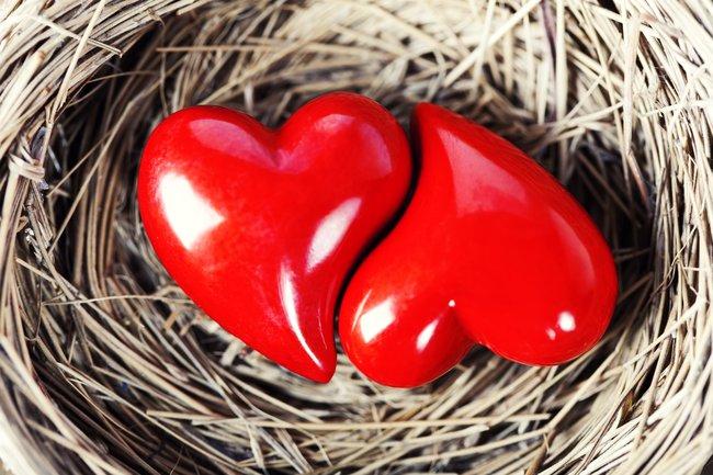 Птичий двор: 14 февраля на крыльях любви