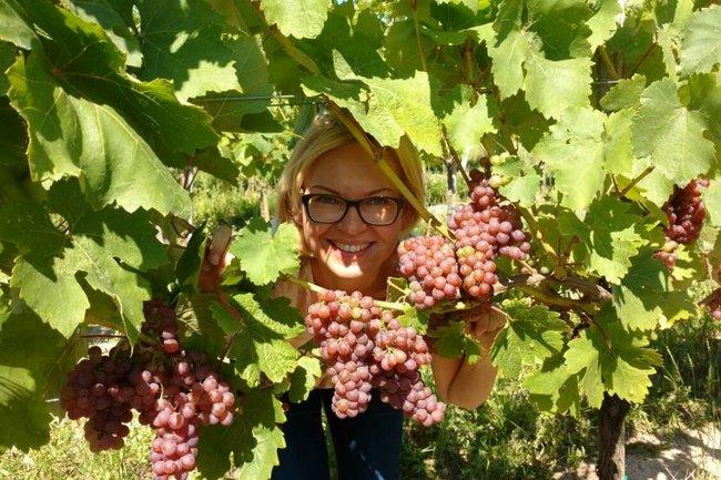 GooseGoose: Ужин с австрийскими винами